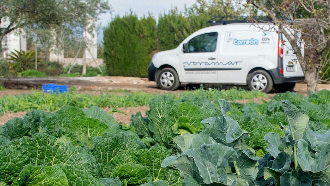 Plan Sostenible Torreón